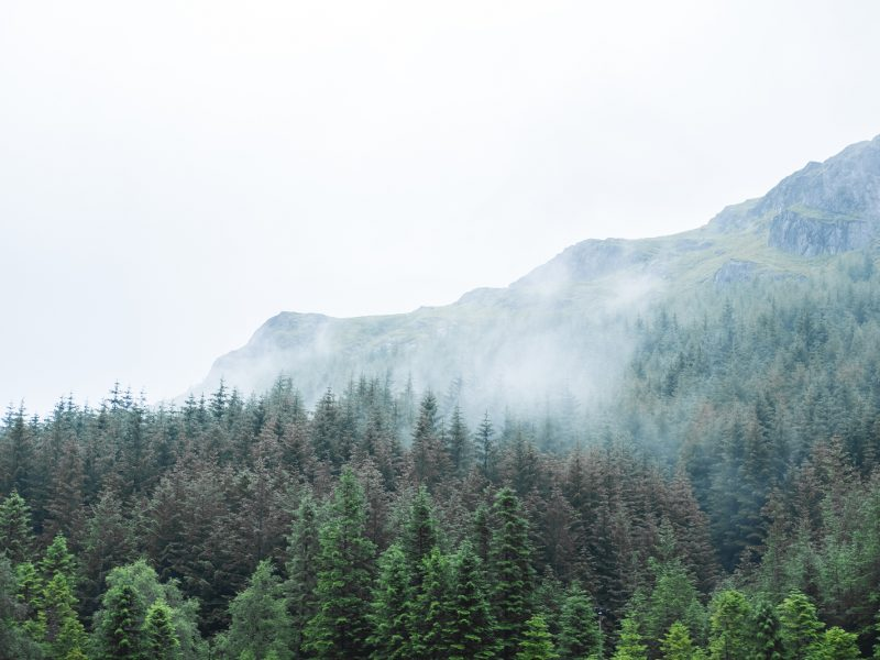 Scenic Landscape View Of Mountain Forest With Fog, In Scottish H